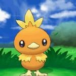1308-09 Pokémon X-Y Torchic 01