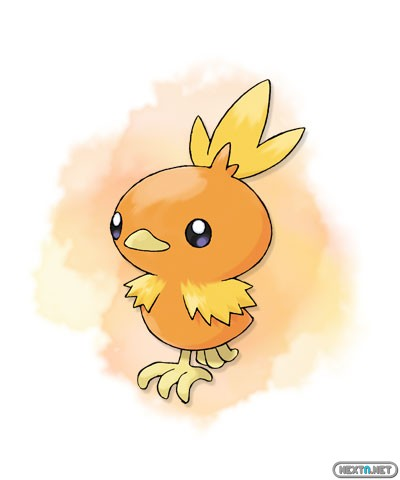 1308-09 Pokémon X-Y Torchic artwork
