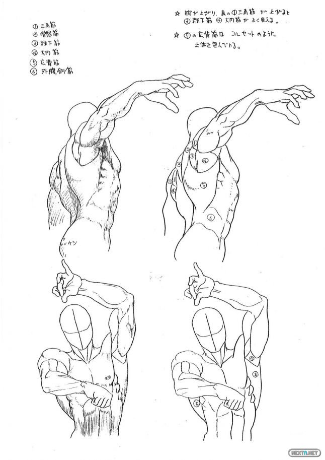 guía anatomía Capcom